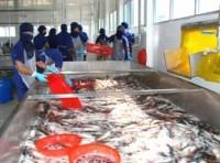 Cá tra Việt Nam bắt đầu tiến vào thị trường châu Âu