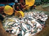 Xuất khẩu cá tra: Tăng sản lượng, giảm hiệu quả?