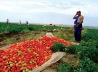 Gặp người mở đầu phong trào 'xuất khẩu nông dân'