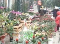 Không khí Tết tràn ngập phố phường Hà Nội