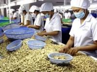 Ba khó khăn trong việc nhập khẩu điều của Việt Nam từ châu Phi