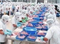 Châu Âu vẫn là thị trường hàng đầu của cá tra Việt Nam