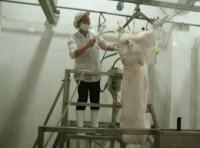 Xiết lại hoạt động giết mổ gia súc, gia cầm tại Hà Nội