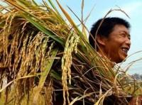 Ưu đãi lãi suất cho vay tạm trữ gạo