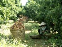 Hỗ trợ doanh nghiệp tham gia Hội chợ Triển lãm Làng nghề Việt Nam 2013