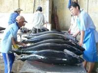 Trung Đông: Điểm đến triển vọng cho cá ngừ Việt Nam