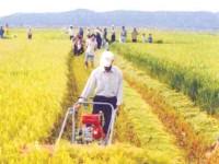 Tập trung giảm nghèo bền vững tại các xã miền núi