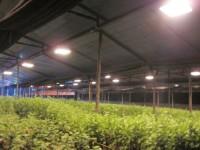 Rạng Đông: Phát triển thị trường chiếu sáng nông nghiệp công nghệ cao