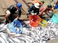 Xuất khẩu cá tra sẽ sớm vượt tôm