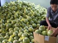Cơ hội lớn cho xuất khẩu trái cây