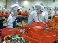 Giảm nhập khẩu, giá tôm tại Mỹ sẽ tăng cao?