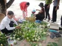 Thương lái thu mua hạt na bán sang Trung Quốc