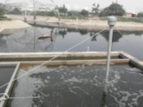 Chế phẩm EMUNIV.S có khả năng làm sạch môi trường nước.
