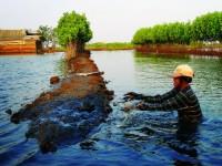 Ô nhiễm môi trường trong nuôi tôm: Các nước ứng phó thế nào?