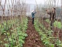 Sản xuất phân bón hữu cơ từ vỏ cây nguyên liệu giấy