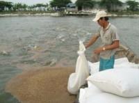 Cần sớm thành lập Hiệp hội người nuôi cá tra- basa