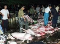 Hà Nội: Chấm dứt hoạt động lò giết mổ gia súc Thịnh Liệt