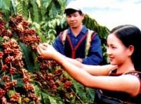 Khánh thành Tổng kho ngoại quan cà phê xuất khẩu lớn nhất Tây Nguyên