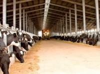 Công ty Cổ phần sữa TH với dòng sản phẩm sạch
