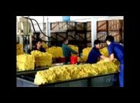 """Xuất khẩu nông, lâm, thủy sản 2010: """"Câu lạc bộ tỷ đô"""""""