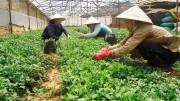 Lào bãi bỏ cấm nhập khẩu 15 mặt hàng từ Việt Nam