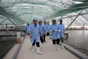 Phó Thủ tướng yêu cầu EVN đảm bảo đủ điện cho nuôi tôm