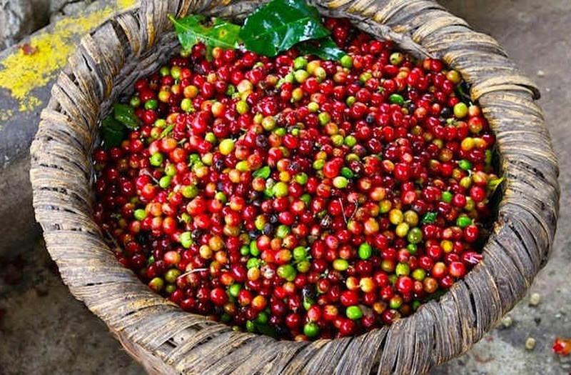 Giá cà phê hôm nay 28/4: Đồng loạt tăng mạnh
