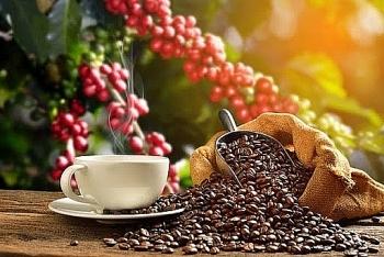 Giá cà phê hôm nay 9/2: Trong nước giảm nhẹ, Arabica tiếp tục tăng