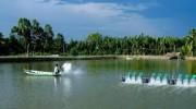 Tăng cường kiểm soát hóa chất, kháng sinh trong sản phẩm thủy sản