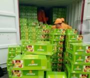 Liên tục phát hiện các lô lá Khát với khối lượng lớn vận chuyển trái phép vào Việt Nam
