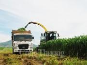 Những khuyến nghị để kiến tạo một nền nông nghiệp bền vững