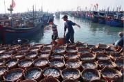Phát huy hơn nữa vai trò khu kinh tế ven biển