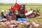 """Xuất khẩu gạo: Giải """"bài toán"""" chất lượng"""