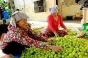 Nông sản Hải Phòng: Thương hiệu nâng tâm giá trị