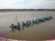 Tiền Giang: Diện tích và sản lượng tôm nuôi nước lợ giảm mạnh