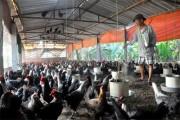 Hà Nội: Nhiều chính sách phát triển nông nghiệp công nghệ cao