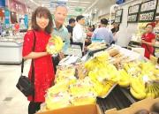 Chuối tiêu hồng Khoái Châu: Tiếng lành đã... đồn xa