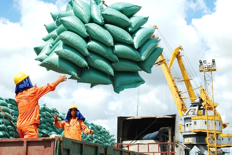 Xuất khẩu gạo cần hướng tới chất lượng, xây dựng thương hiệu bền vững. Ảnh: C.V.D