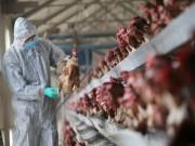 Khuyến cáo khách du lịch tránh đi đến các khu vực có ổ dịch cúm A (H7N9)
