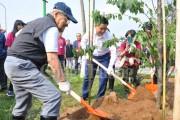 Thêm 500 cây hoa anh đào được trồng tại Hà Nội