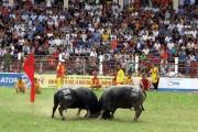 Rà soát quy trình thực hành di sản văn hóa phi vật thể lễ hội chọi trâu Đồ Sơn