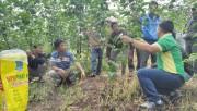 Phân bón Phú Mỹ đồng hành với nông dân huyện Kbang chuyển đổi cơ cấu cây trồng