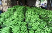 Doanh nghiệp Việt cần lưu ý khi xuất khẩu chuối sang Trung Quốc