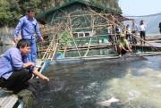 Ngày hội thủy sản các tỉnh lưu vực sông Đà tại Hà Nội