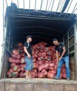 Big C Việt Nam và Central Group Việt Nam thu mua hàng chục tấn bí đỏ hỗ trợ nông dân Đăk Lăk