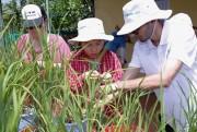 Syngenta truyền cảm hứng cho sinh viên xây dựng nền nông nghiệp bền vững