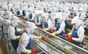 Thực thi EVFTA, cần nâng cao nhận thức về kiểm soát an toàn chất lượng nông thủy sản