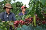 Xuất khẩu cà phê một năm thắng lớn