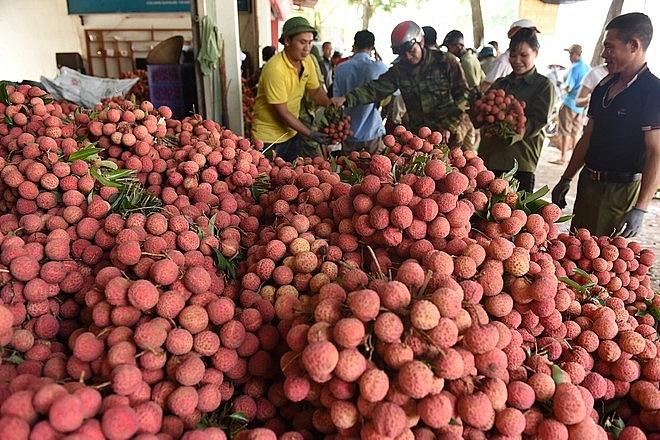 chủ động biện pháp vận chuyển hàng, hỗ trợ tiêu thụ nông sản vào vụ thu hoạch