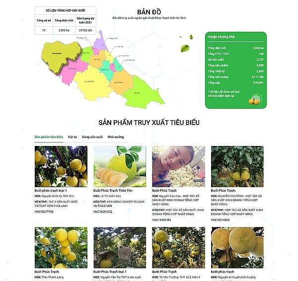 Hà Tĩnh đã hoàn thiện hệ thống truy xuất nguồn gốc cây bưởi Phúc Trạch tại địa chỉ: https://buoiphuctrach.gov.vn